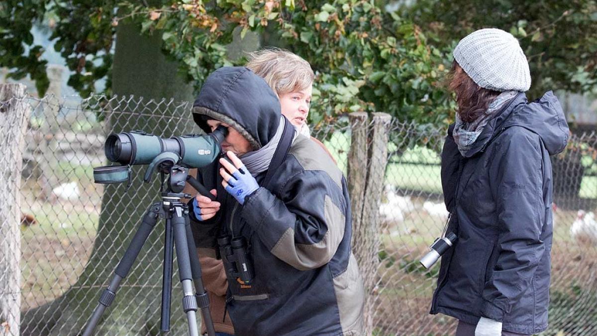 Kranichbeobachtungen auf der Malreise in den Müritz Nationalpark (c) FRank Koebsch (4)
