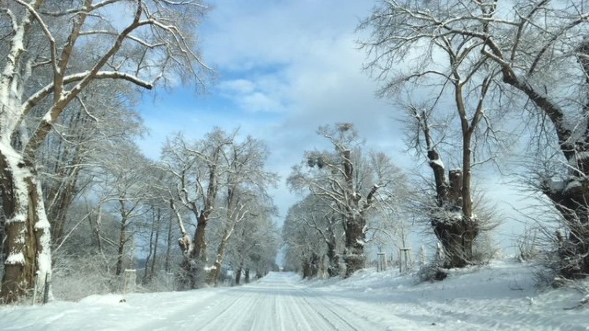 allee-im-winter