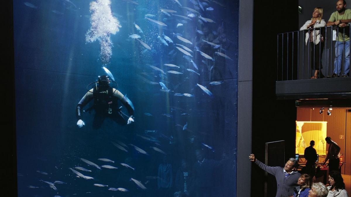aquarium_1287408943_2