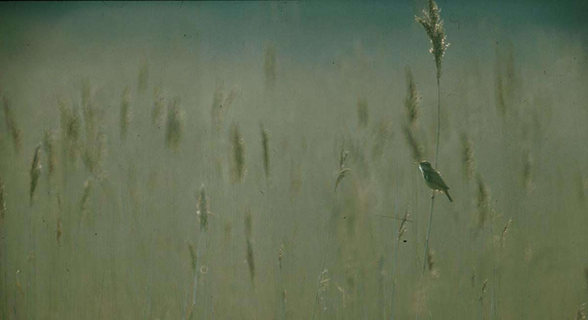 Vogel-Führung im Müritz-Nationalpark