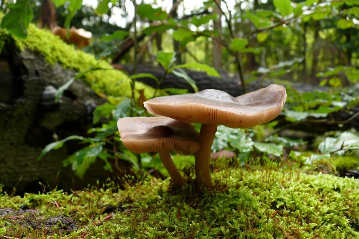 pilze-die-heimlichen-herrscher-des-waldes_nationalparkamt-mueritz