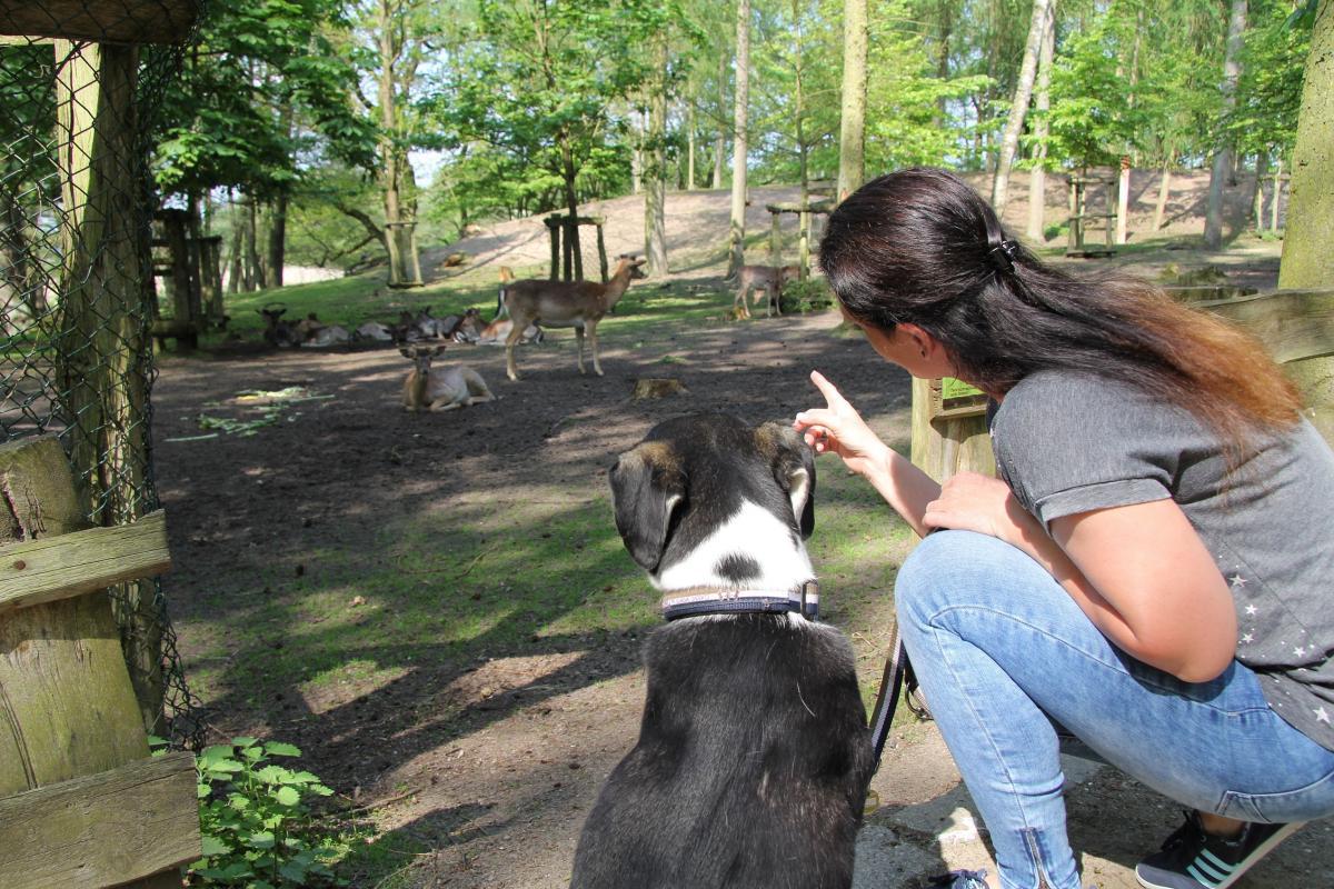 Mit Hund im Wildpark-MV unterwegs