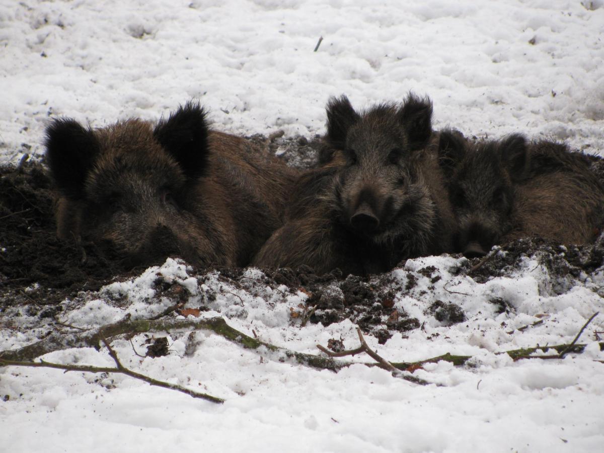 Welche Spuren hinterlassen wohl Wildschwein und Co.?